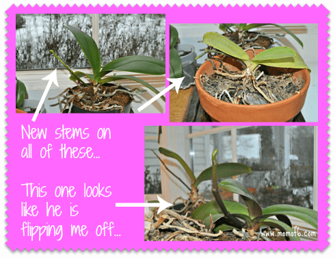 Ignoring My Houseplants New Stems On Ignoring My Houseplants {#ShareYourLife}
