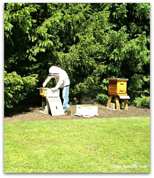 Share Your Life bee keeping Doing Some Things for Me... {Share Your Life!}