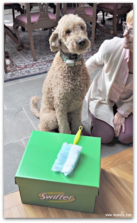 Swiffer1 Dog Ownership Can Be Messy….